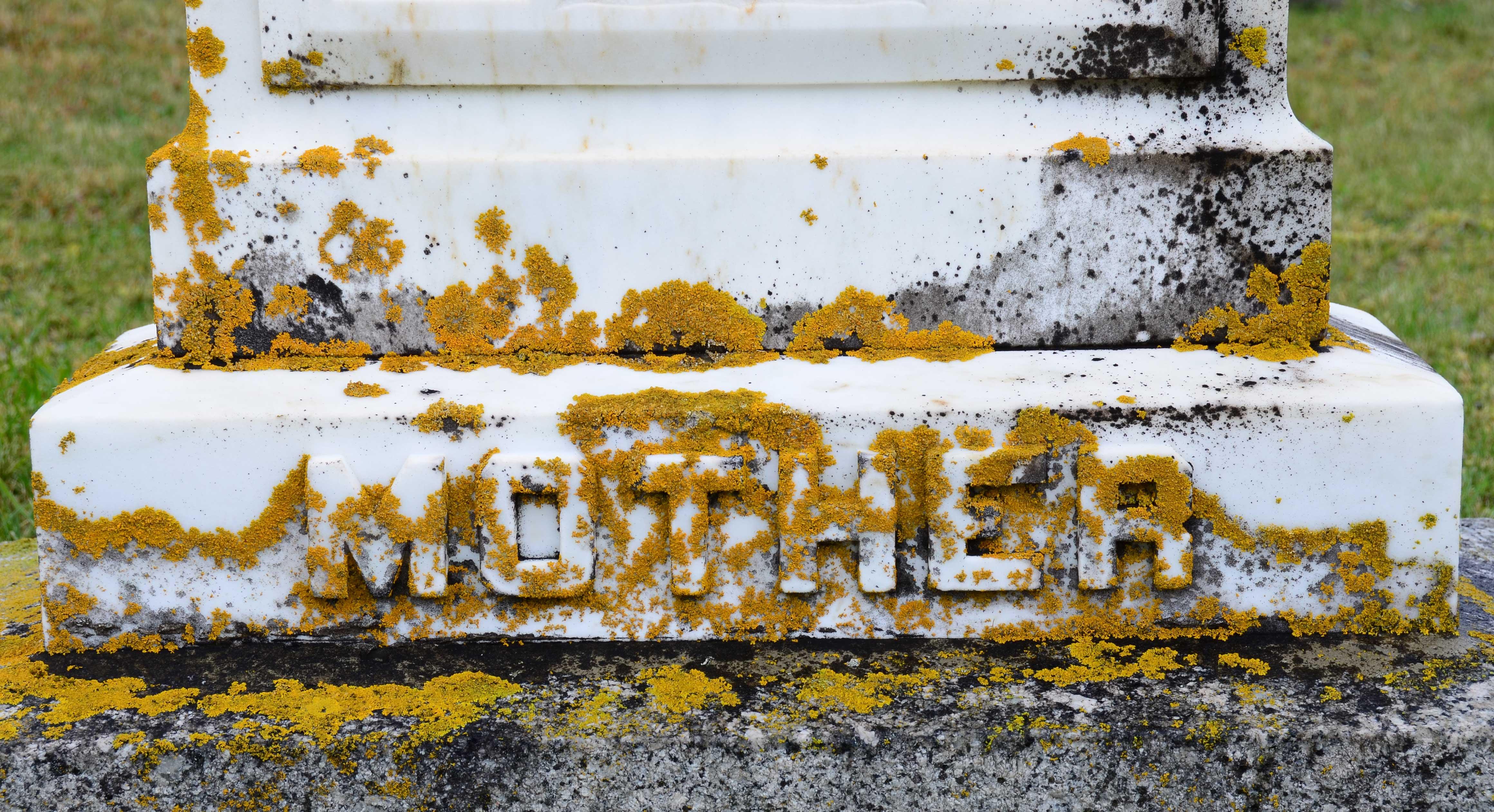 mDSC_9417